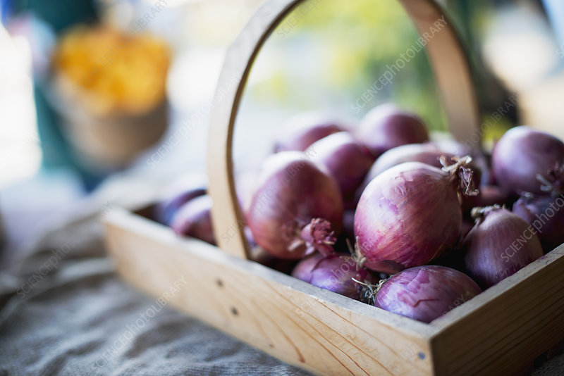Organic Red Onions in Basket