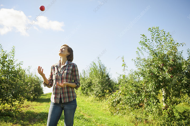 A woman juggling apples in an orchard