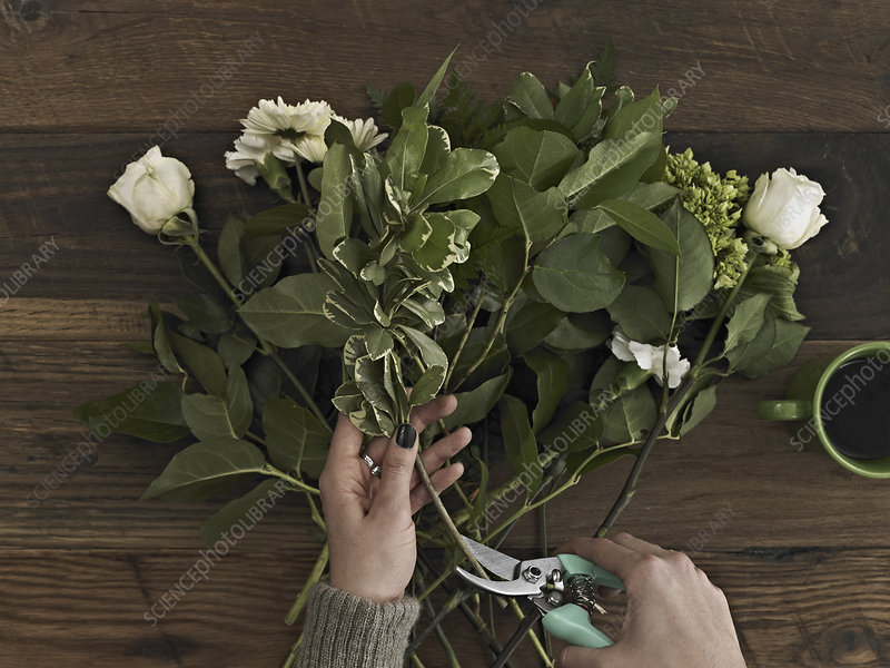 A woman cutting the base of flower stems
