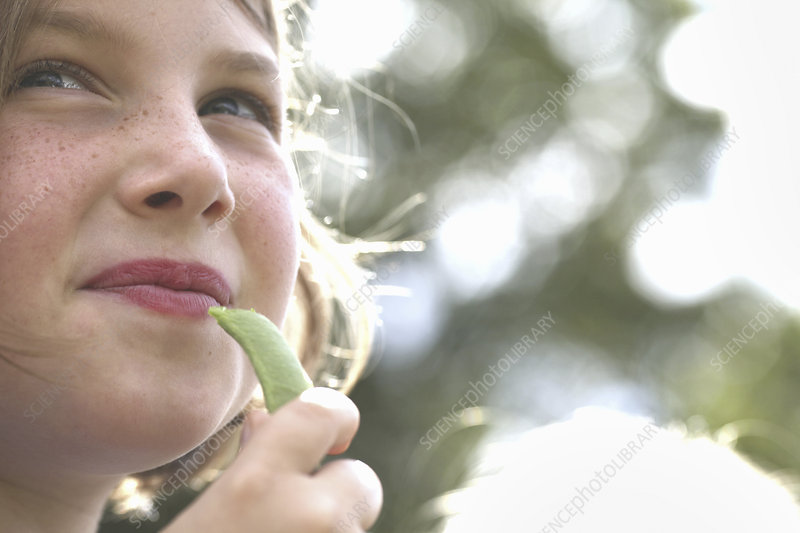 A child eating an organic snap pea