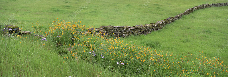 Meadow with stone wall and wildflowers