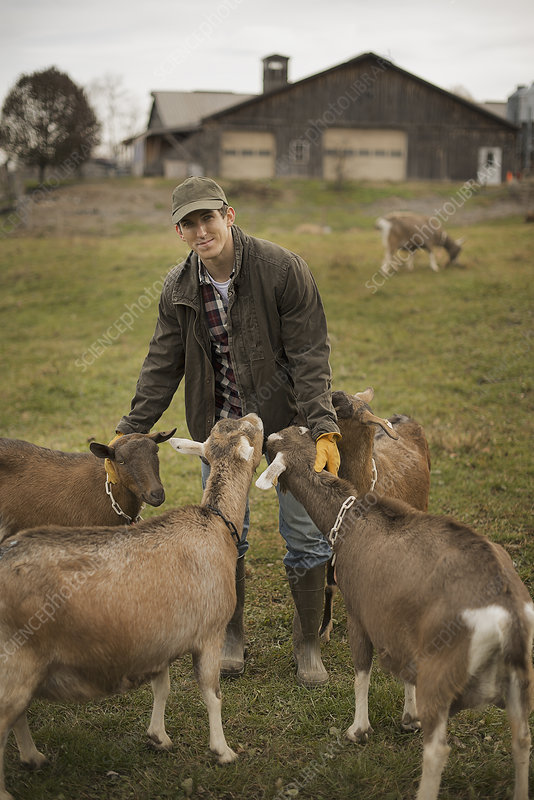 An organic dairy farmer with animals