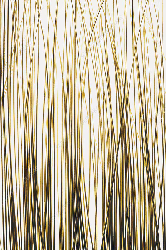 Ornamental grasses on white background