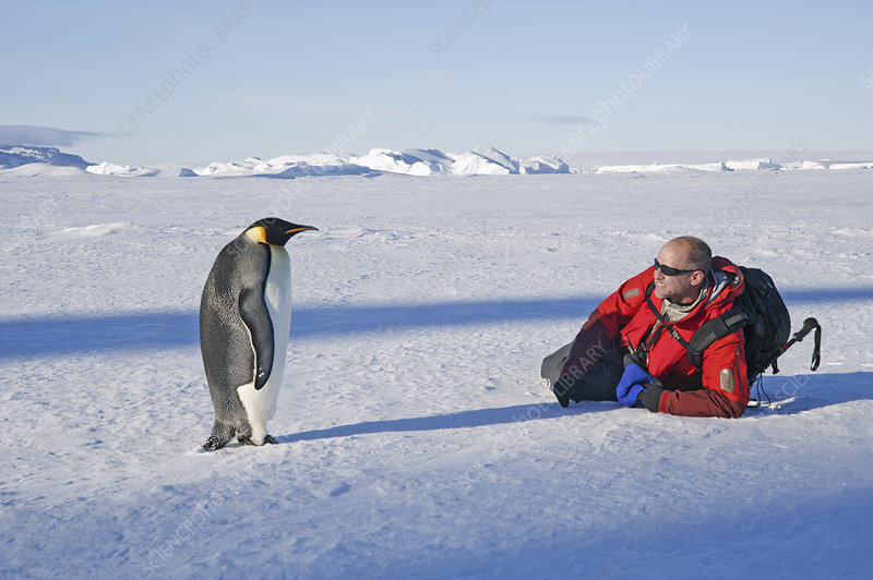 A man close to an emperor penguin