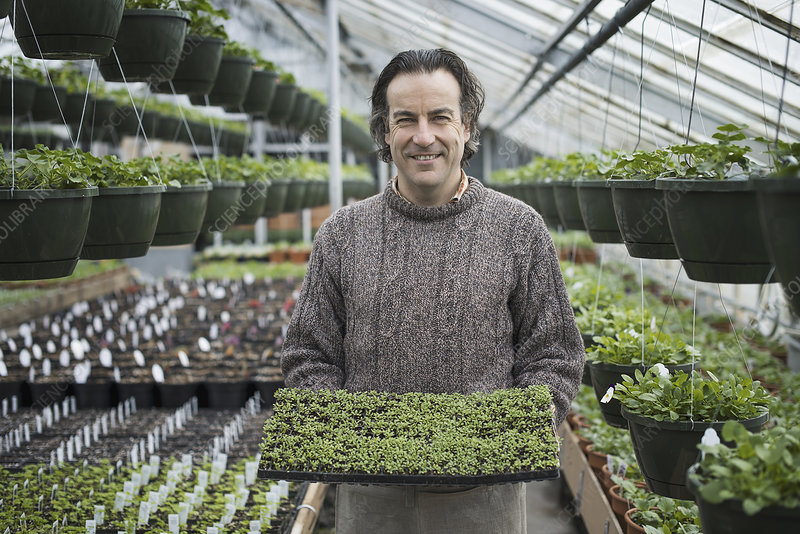 A man holding a tray of green seedlings