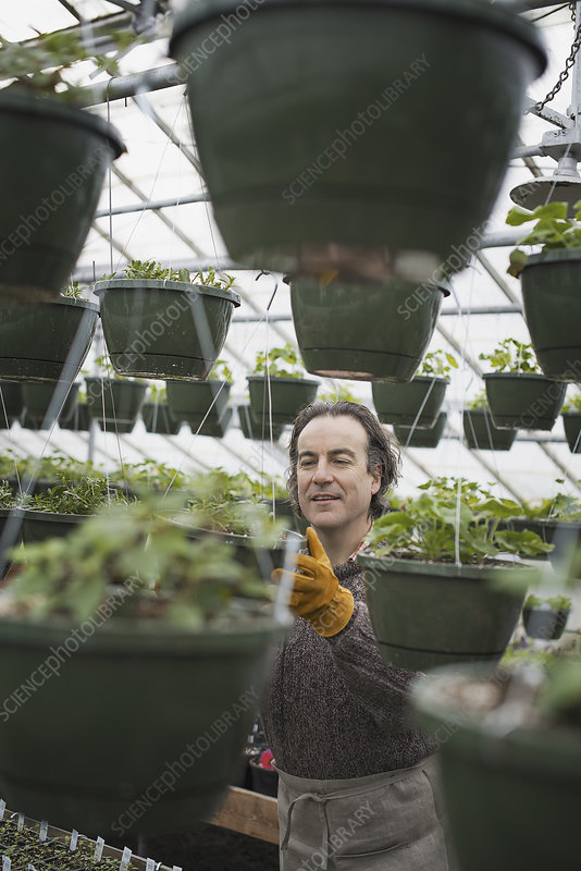 A man in glasshouse planting containers