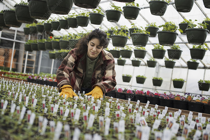 A woman checking plants and seedlings
