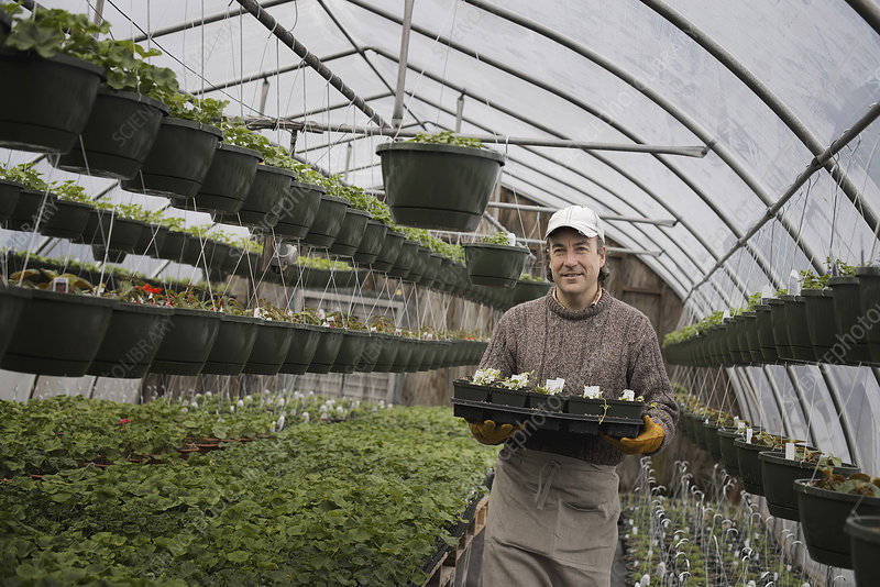 A man holding trays of seedlings