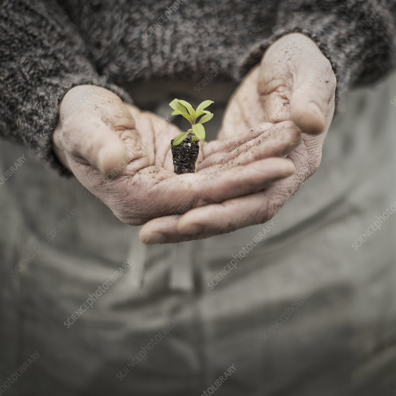 A man holding a seedling in his hands