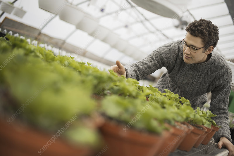 A man working in a greenhouse