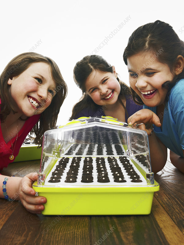 Three children looking at seed tray