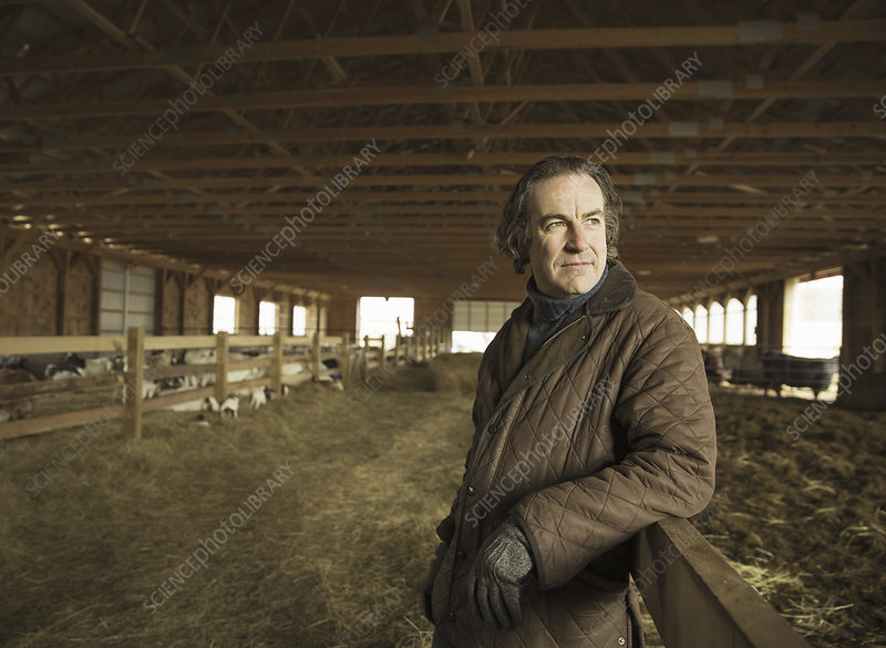 A farmer in a barn at lambing time