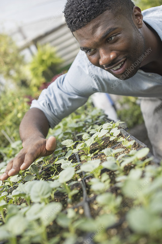 A man checking seedlings at a nursery