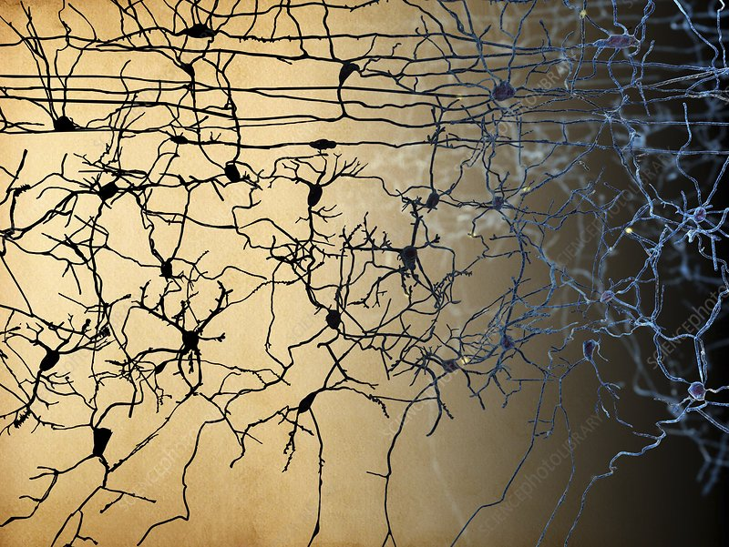 Nerve cells, artwork