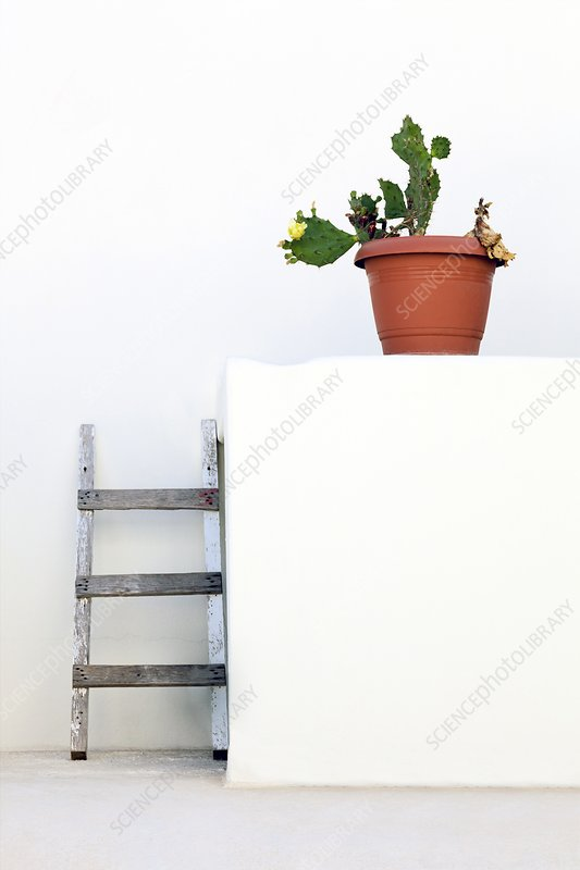Cactus and white wall