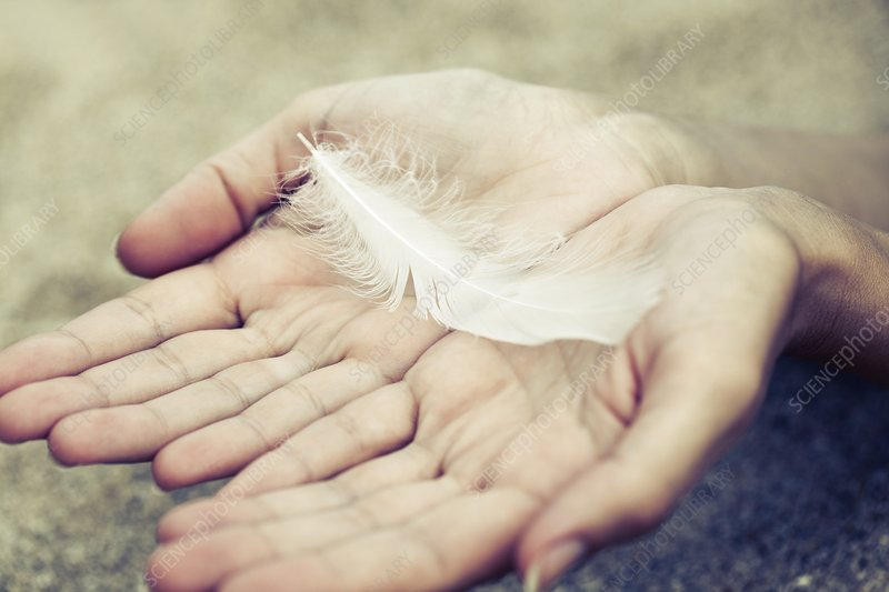 Hands holding feather
