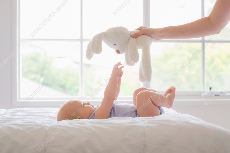Cropped hand holding soft toy above baby