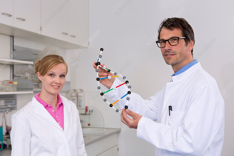 Scientists with dna molecular model