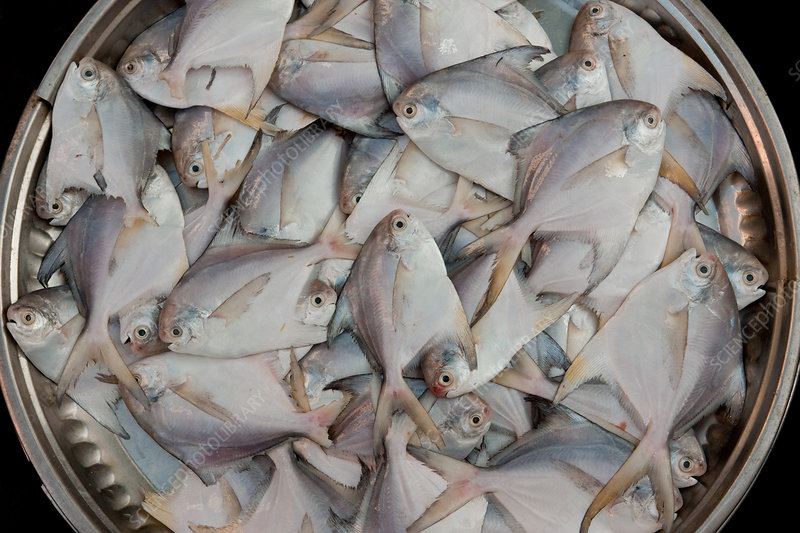 Fresh fish in a basket, Myanmar market