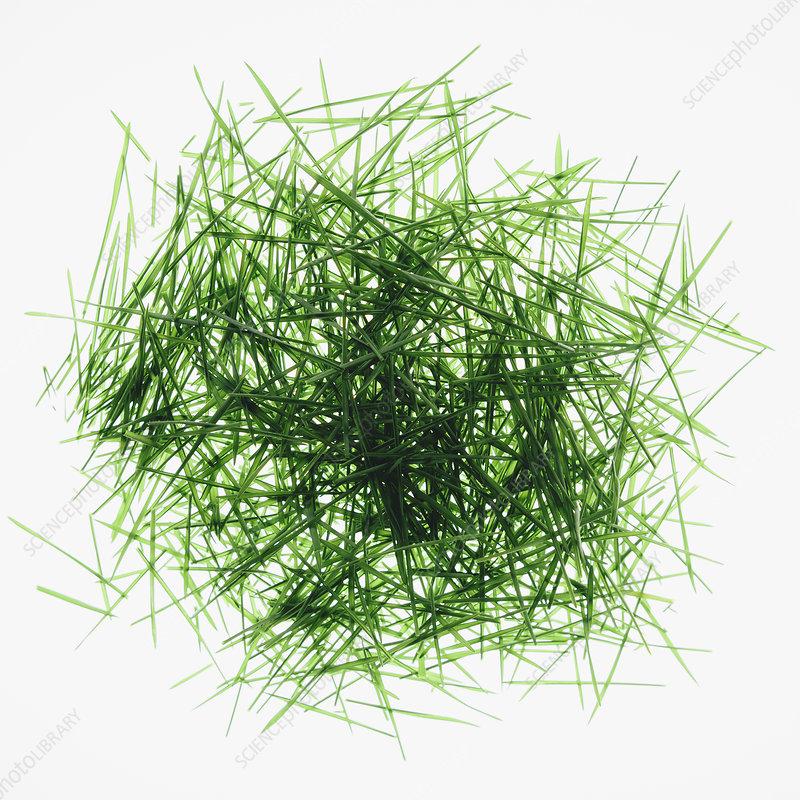 Pile of organic wheatgrass leaves