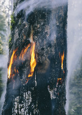 A controlled forest burn for regrowth