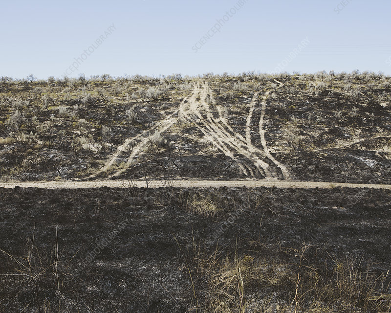 Recent fire damage in a landscape