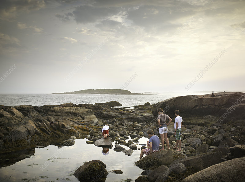 A group of people rockpooling.