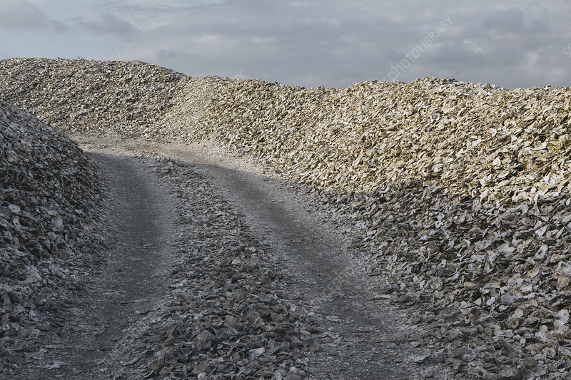 Discarded oyster shells, USA