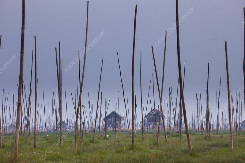 The marshes of Inle Lake, Myanmar