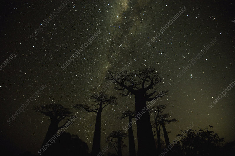 Night sky in Madagascar