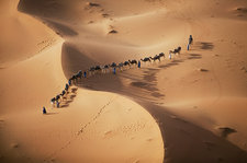 Camel train in the Sahara