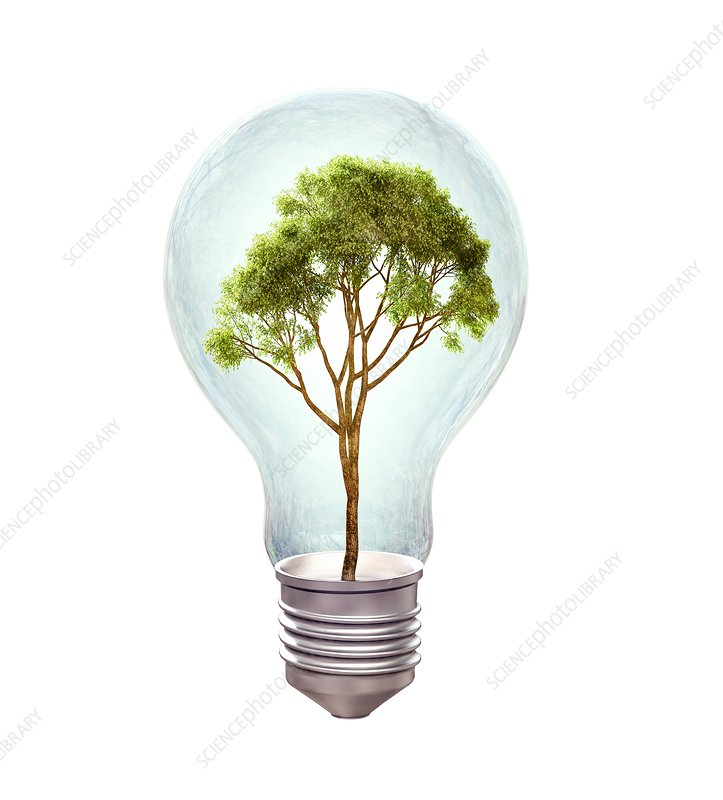 Tree inside lightbulb, artwork