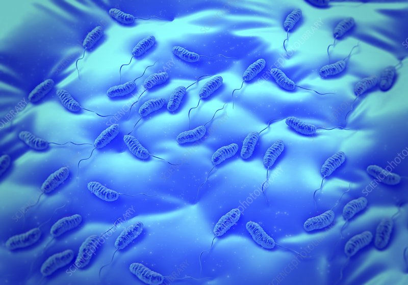 Cholera bacteria, artwork