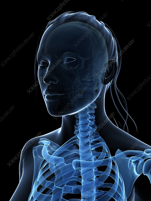 Female neck bones, artwork