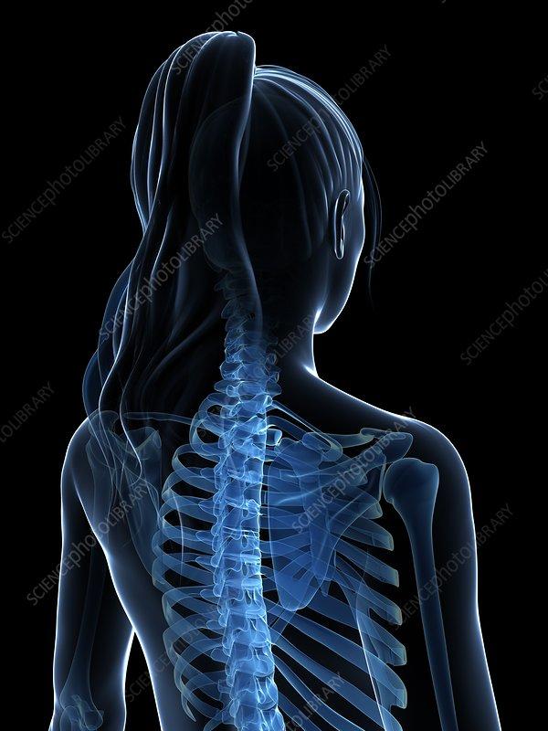 Female spine, artwork