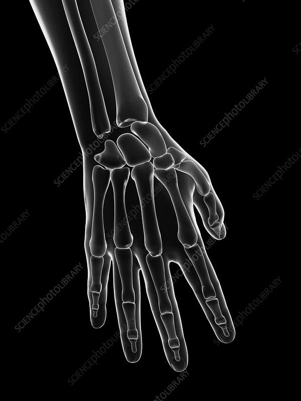 Human hand bones, artwork
