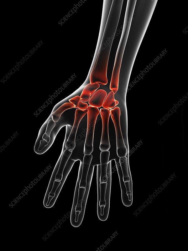 Human wrist, artwork