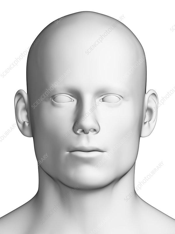 Human head, artwork