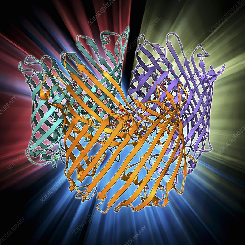 Sucrose-specific porin molecule