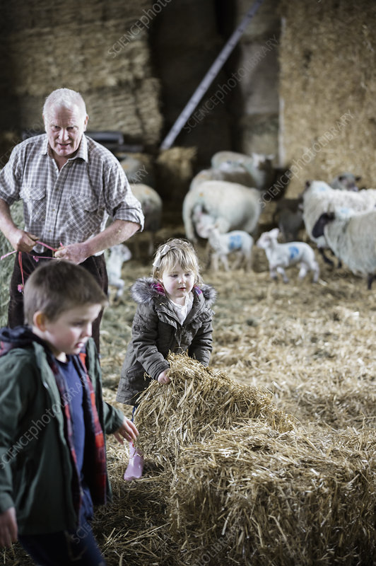 Children and lambs in a lambing shed
