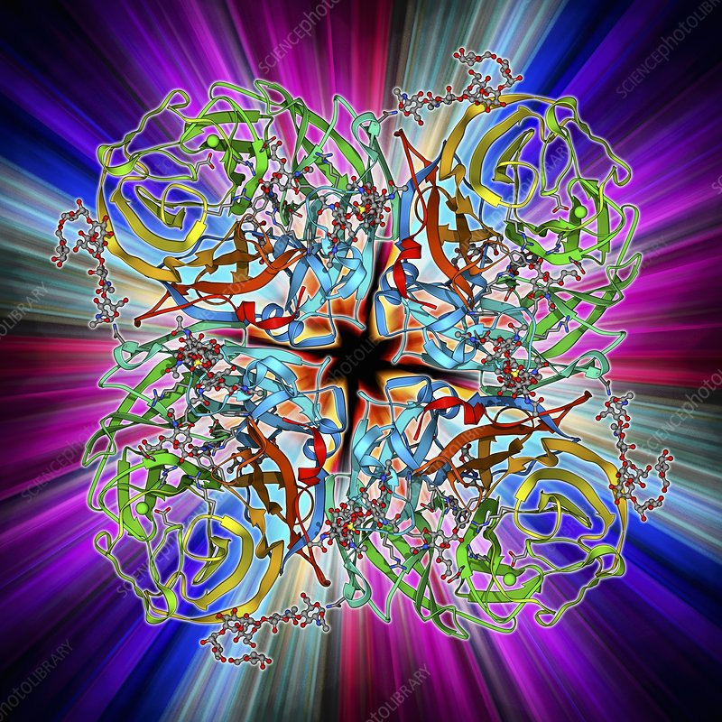 virus and cell surface molecule Molecules and the receptors are often present in low numbers on the cell surface  however, it is possible to incorporate sufficient radioactive label into virus.
