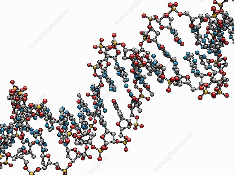 DNA (Deoxyribonucleic acid), artwork