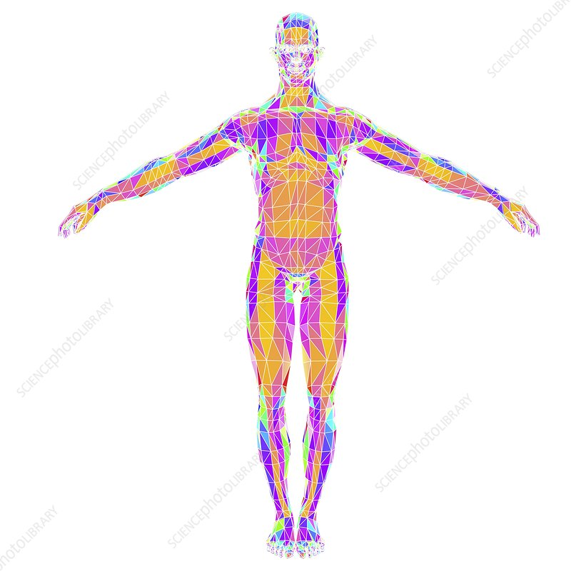 Abstract polygonal model of a man