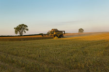 Oil seed rape and combine harvester