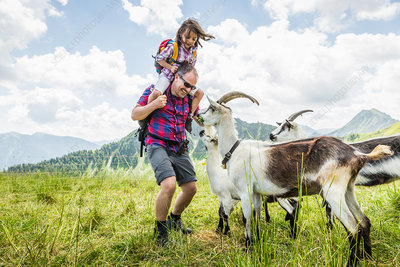 Father and daughter with goats