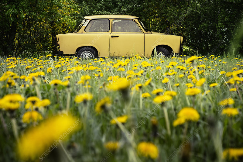 Vintage yellow car in field