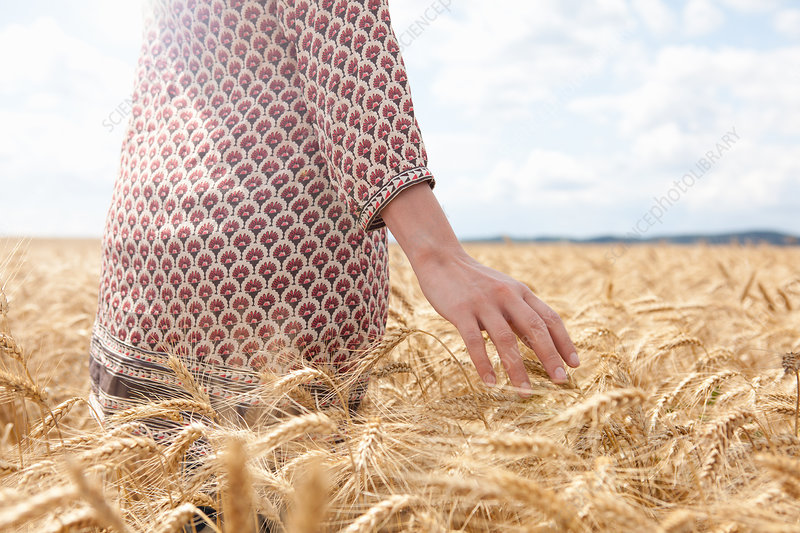 Mid section of woman in wheat field