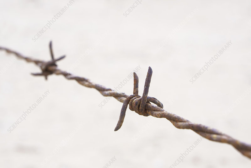 Close up detail of rusty barbed wire