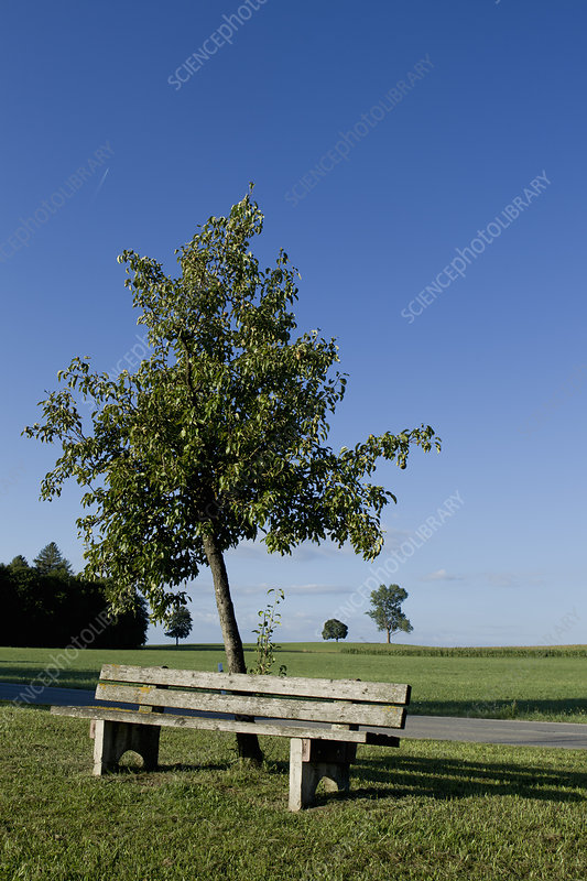 Tree and bench with clear blue sky