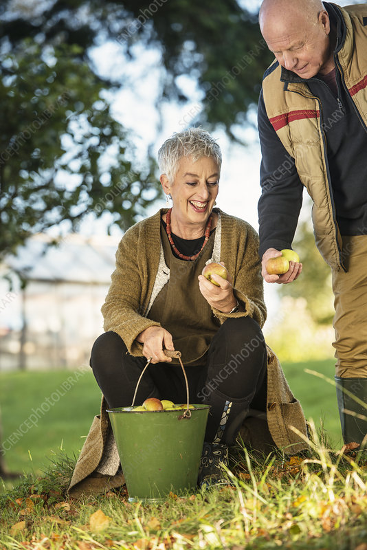 Senior couple admiring apples from bucket